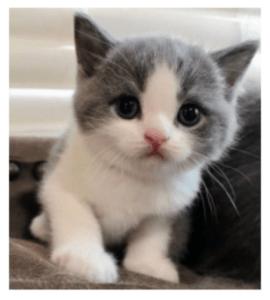 Cat image for data augmentation