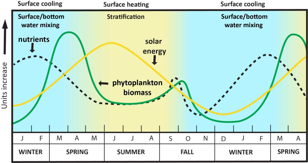 typical seasonal patterns of solar energy, phytoplankton biomass and nutrients