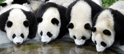 Put Some Pandas in Your Python (1/4)