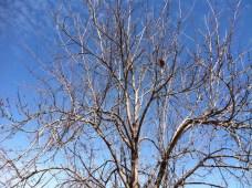 An empty nest, but not for long?