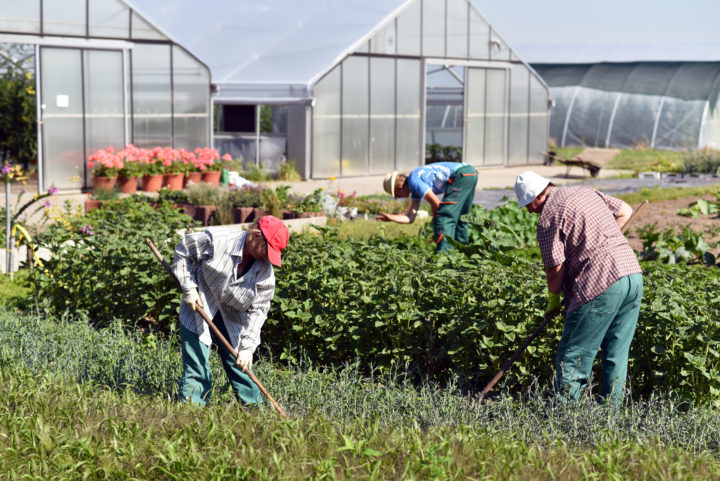 Farm labor service creates 'day of rest' waiver form