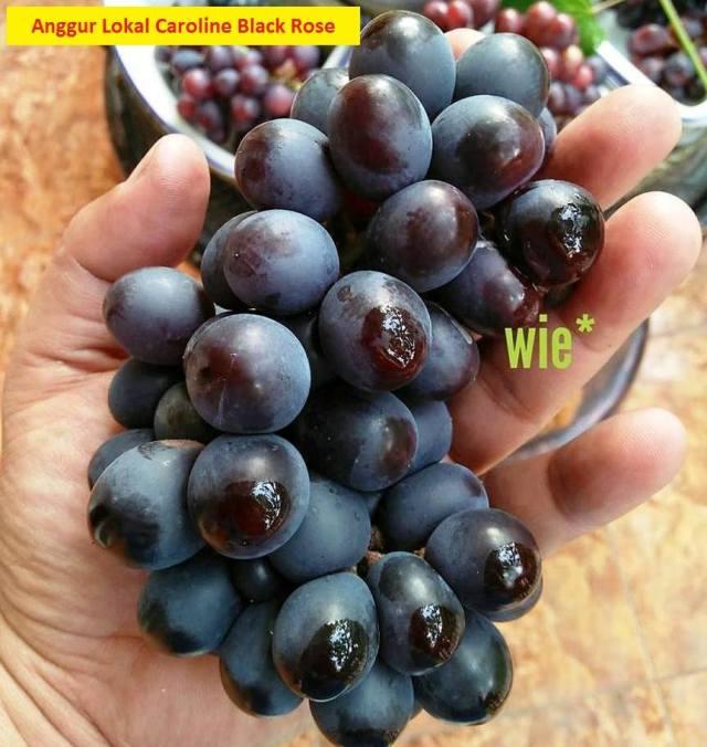 Anggur Caroline Black Rose 6