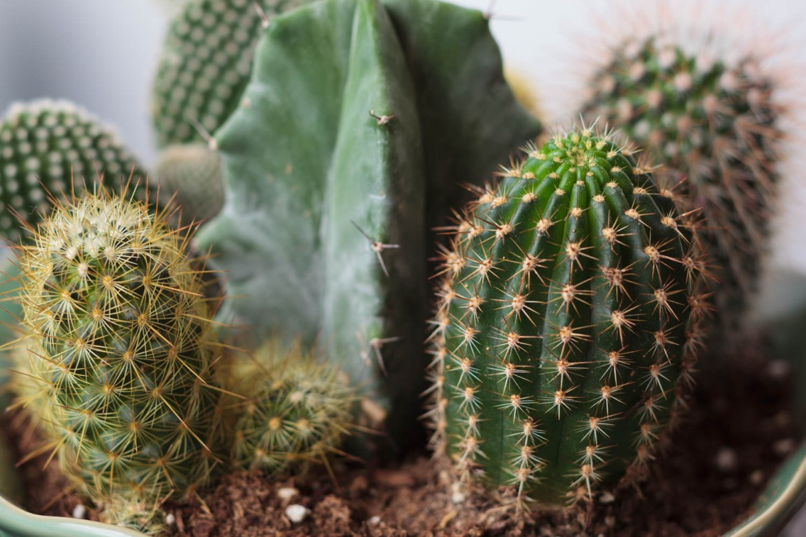 You gotta have cacti in an acupuncture clinic