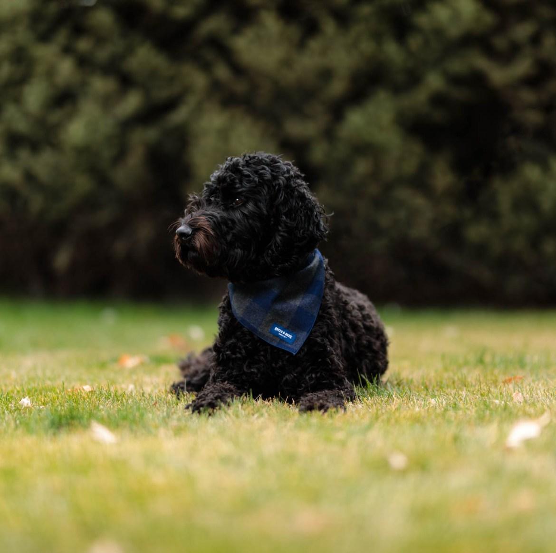 Rocco wears a blue bandana
