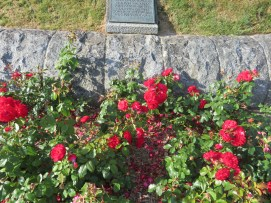 The only color in the cemetery are the rose bushes around the hill.