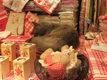 How often do you see a cat sleeping in a store?