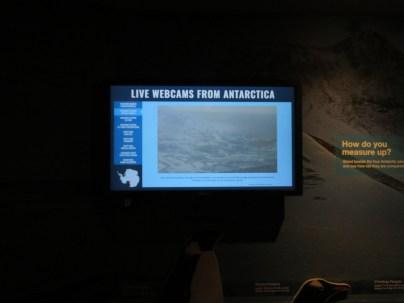 A live Antarctica webcam.