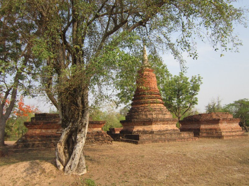 Teee and stupa in Sukhothai Historical Park