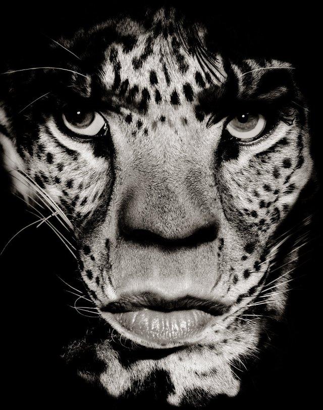 Albert Watson_Mick Jagger Leopard