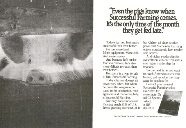 even-the-pigs-successful-farming-tom-mcelligott-fallon-mcelligott-01