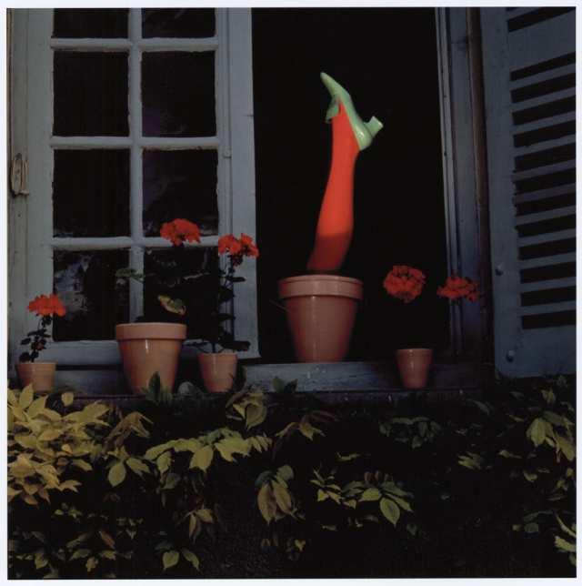 'Flower Pot*' Charles Jourdan, Guy Bourdain.jpg
