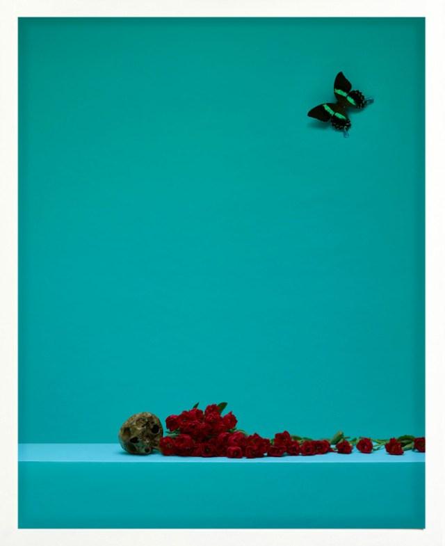 'Butterfly' Satoshi Saikusa, 2017_large