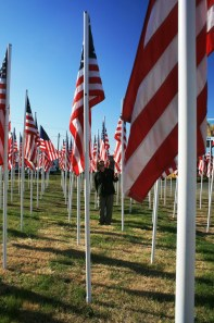 Flags for Vets.