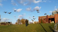 Geese taking to the sky over Dave's head.