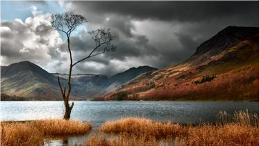 The Buttermere Tree - Canvas Print