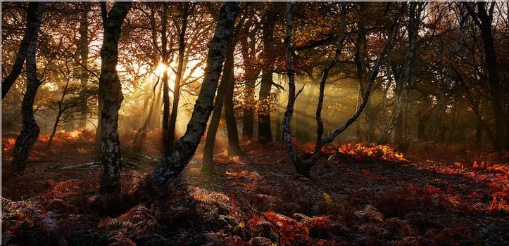 Golden Sherwood Forest - Canvas Print