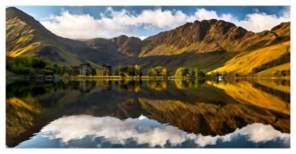First Light on the Buttermere Pines - Lake District Print
