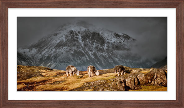 Three Sheep and a Mountain - Framed Print with Mount