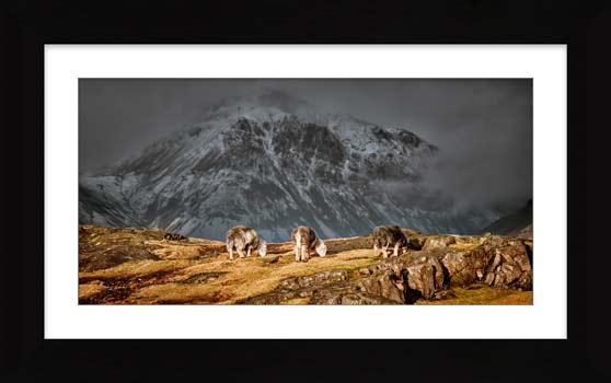 Three Sheep and a Mountain - Framed Print