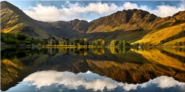 First Light on the Buttermere Pines - Canvas Print