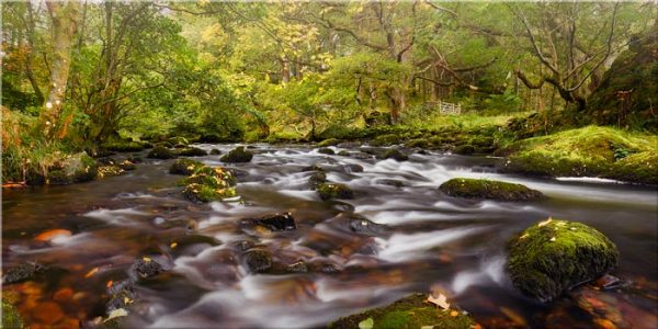 Start of Autumn River Rothay - Canvas Print