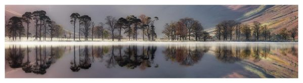 Buttermere Trees Silhouette - Lake District Print