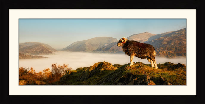 Ram at Grasmere - Framed Print