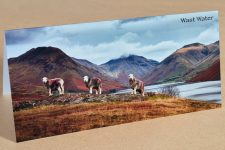 Wast Water Gift Card