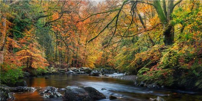 Golden Trees of Eskdale - Canvas Print