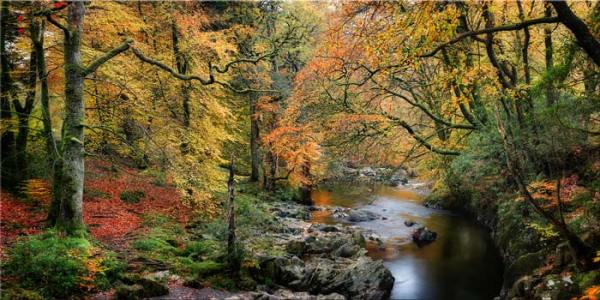 Autumn Woodlands of Eskdale - Canvas Print