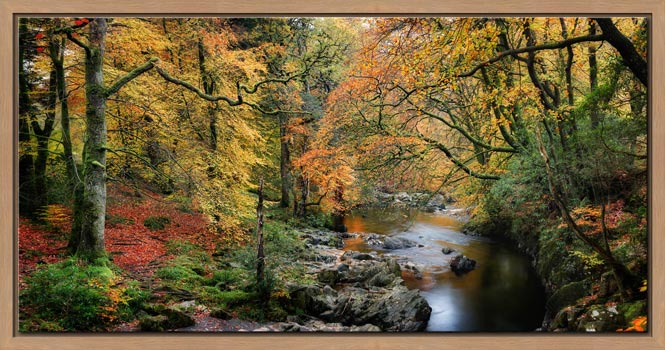Autumn Woodlands of Eskdale - Modern Print