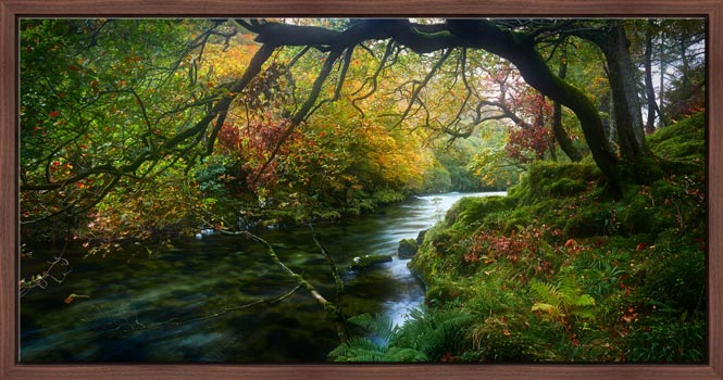 Autumn colours around the River Derwent in the Borrowdale Valley in the Lake District