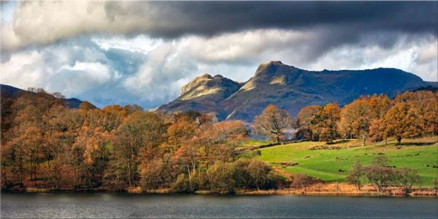 Golden Trees of Langdale - Canvas Print