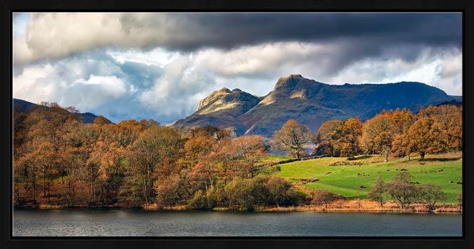 Golden Trees of Langdale - Modern Print