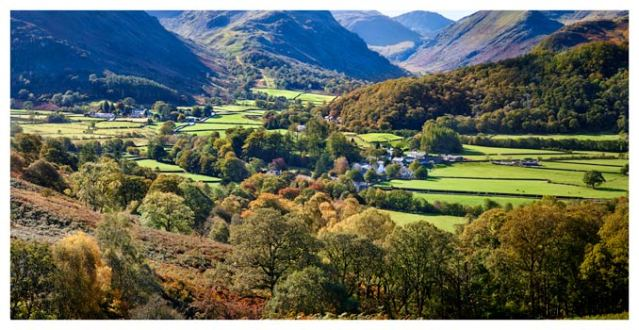 Trees of Borrowdale - Lake District Print
