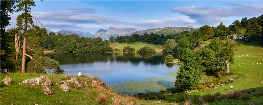 Summer Greens of Loughrigg Tarn - Lake District Canvas