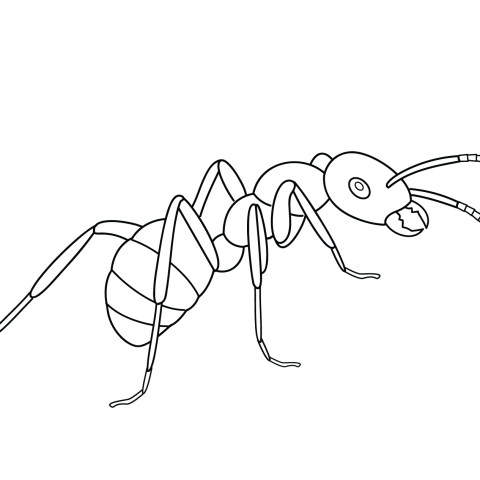 Ant Coloring Page Ants Coloring Pages Free Coloring Pages