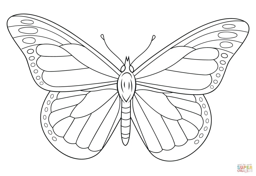 Butterflies Coloring Pages Monarch Butterfly Coloring Page Free Printable Coloring Pages