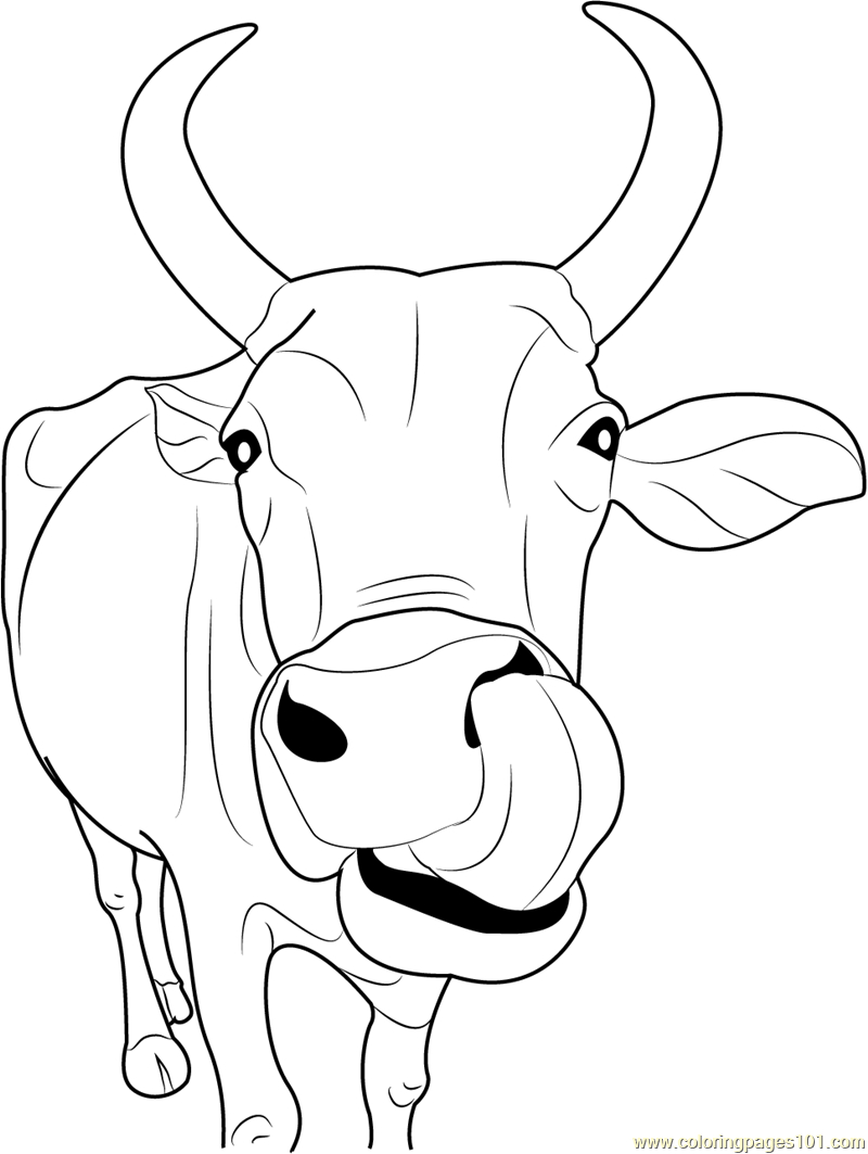 Cow Coloring Page Indian Cow Face Coloring Page Coloring Home