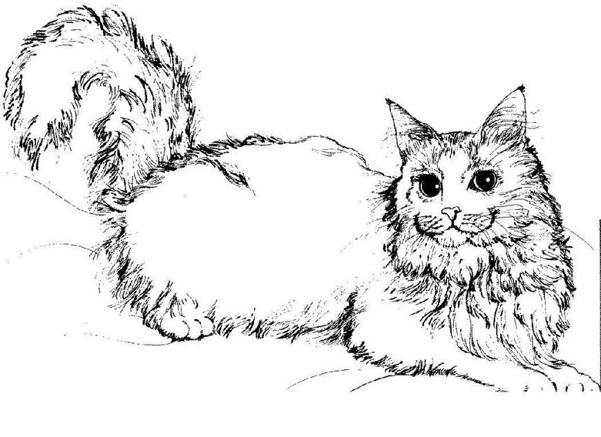 Cute Cat Coloring Pages Free Printable Cat Coloring Pages For Kids