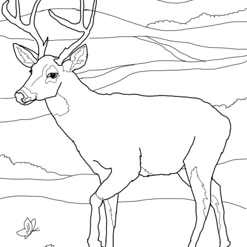 Deer Coloring Page White Tailed Deers Coloring Pages Free Coloring Pages