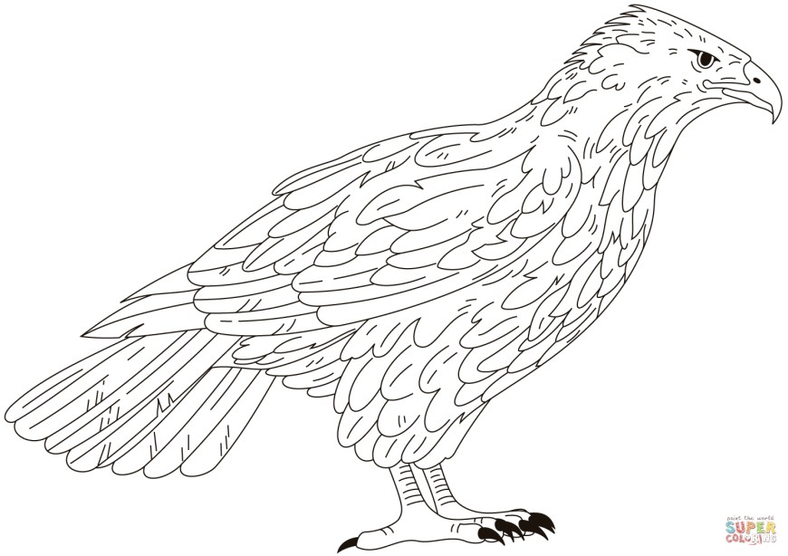 Falcon Coloring Pages Falcon Coloring Page Free Printable Coloring Pages