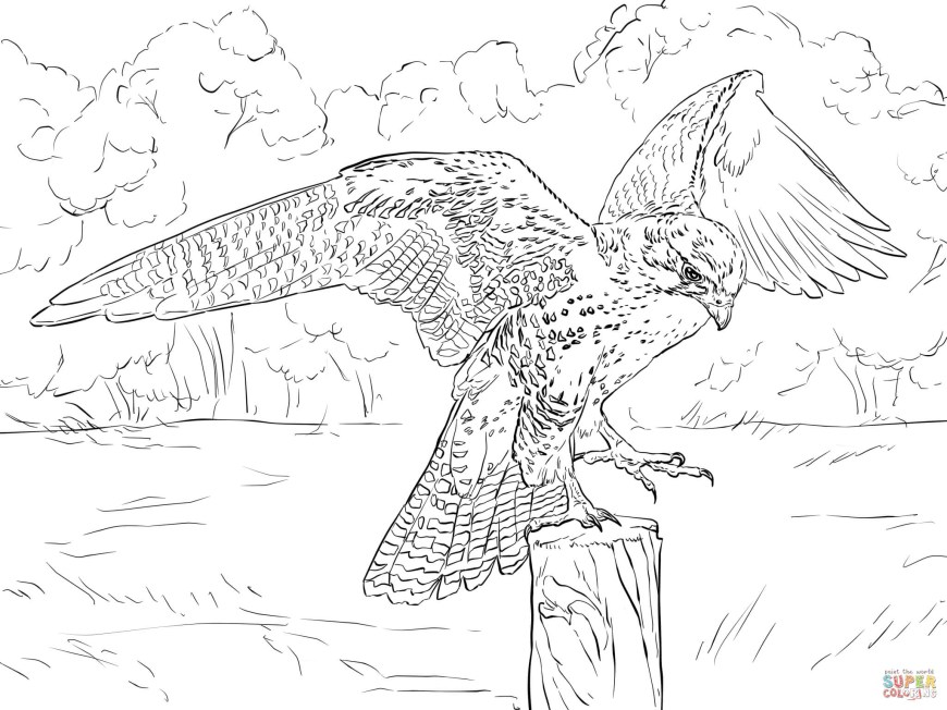 Falcon Coloring Pages Prairie Falcon Coloring Page Free Printable Coloring Pages