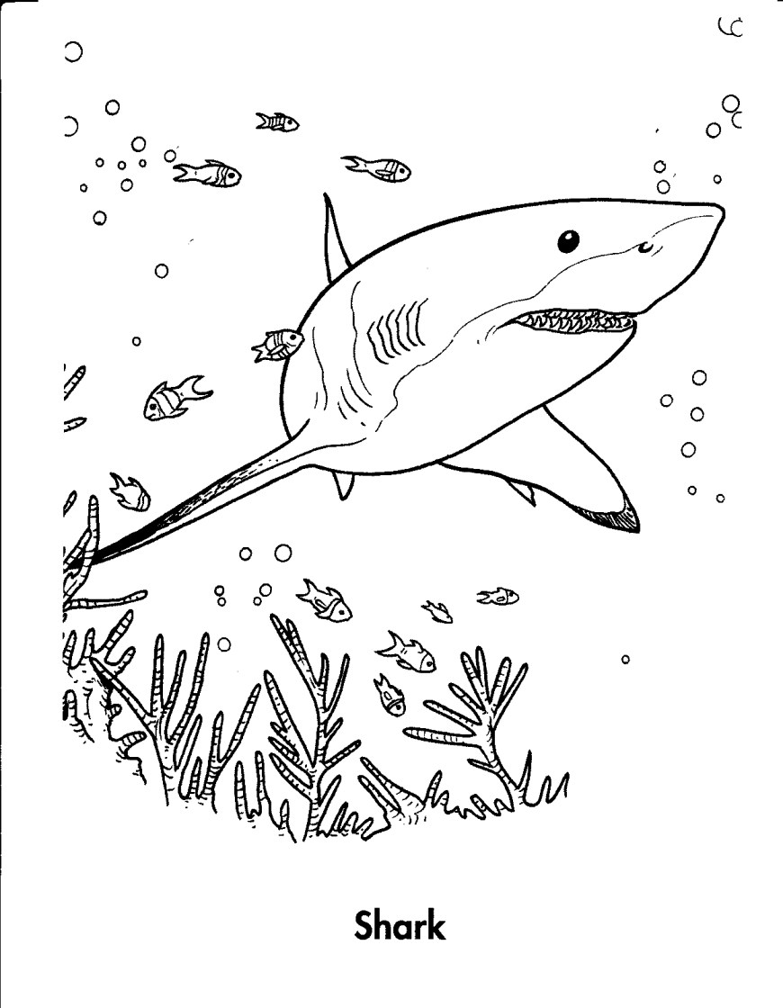 Great White Shark Coloring Pages Free Printable Shark Coloring Pages For Kids