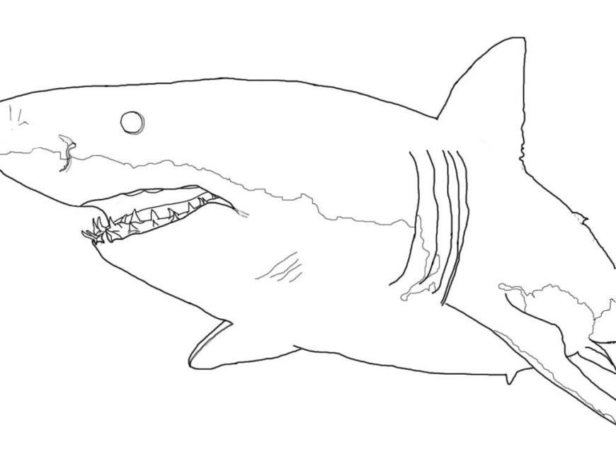 Great White Shark Coloring Pages Realistic Great White Shark Coloring Pages Lovely Reference Coloring