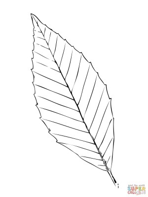 Leaf Coloring Pages Beech Tree Leaf Coloring Page Free Printable Coloring Pages