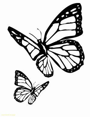 Monarch Butterfly Coloring Page 21 Monarch Butterfly Coloring Pages Collection Coloring Sheets