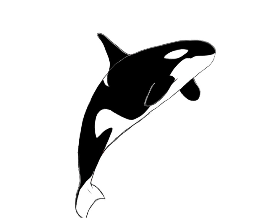 Orca Coloring Pages Orca Coloring Pages Csengerilaw