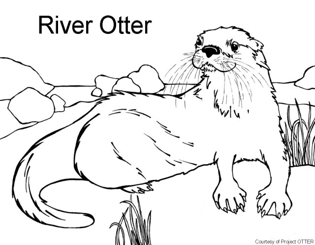 25 great image of otter coloring pages  davemelillo