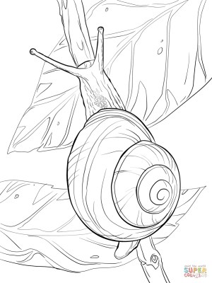 Snail Coloring Page Snail Coloring Pages Free Coloring Pages